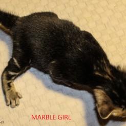 Marble Girl